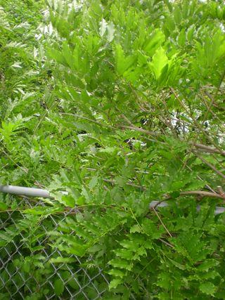 Garden2010 009