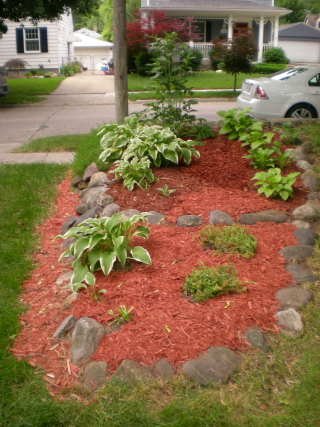 Garden2010 005