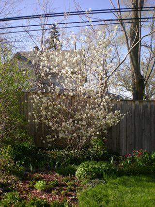 Spring 2011 029